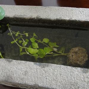 石雕鱼缸5